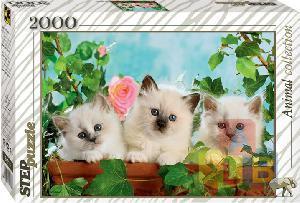 Пазл 2000 Котята с розой арт.84018 фото