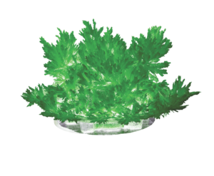 "Лучистые кристаллы ""Зеленый кристалл"" арт. Лк-003  фото"